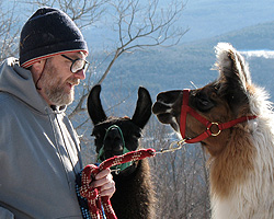 John taking the llamas for a winter walk along the top of the mountain