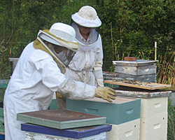 In the beeyard, Carol introduces an intern to the inside of a hive.