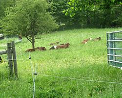 A mix of permanent and portable fences lets us keep the animals secure as well as rotate them through the pastures frequently and in paddocks that can change sizes