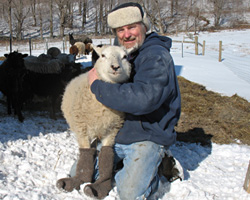 Our warm and comfy sheep and llama blend socks are sheep tested and sheep approved!