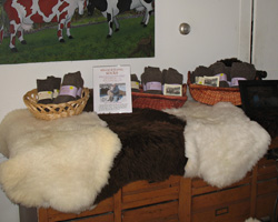 There is a changing array of lambskins of many colors and fleece length.