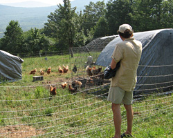 A touring visitor surveys the laying hens system.